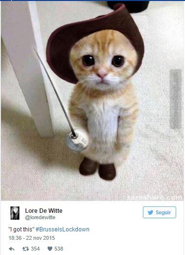 gato nuevo 3